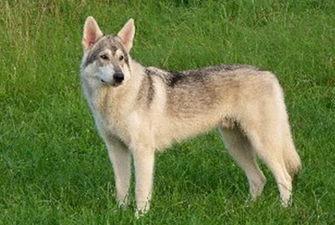 First Northern Inuit in Indonesia